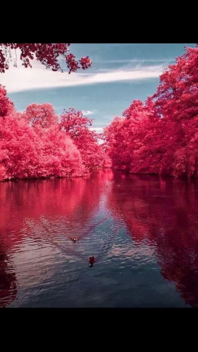 Wow what gorgeous colour. Pink lake www.madblossom.com.au