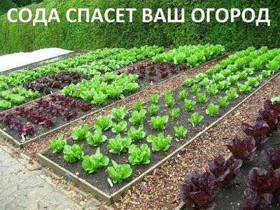 kastory.ru