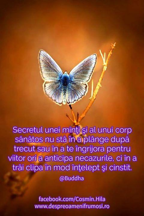 Secretul unei minţi şi al unui corp sănătos nu stă în a plânge după trecut sau în a te îngrijora pentru viitor ori a anticipa necazurile ci în a trăi clipa în mod înţelept şi cinstit.  Buddha  http://ift.tt/2fnOPkG  Seară frumoasă prieteni oriunde v-ați afla!  http://ift.tt/2dUqotH