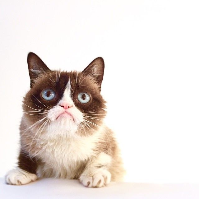 """Terrible news...Grumpy Cat is nominated for @TheWebbyAwards! Vote now at www.webbyawards.com! #TeamGrumpy #Webbys #grumpycat #webbyawards"""