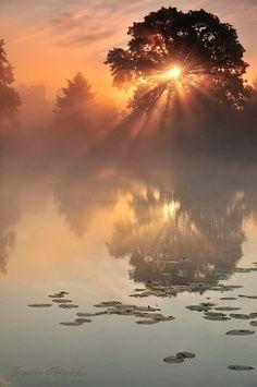 morning fog glowing in the sunrise