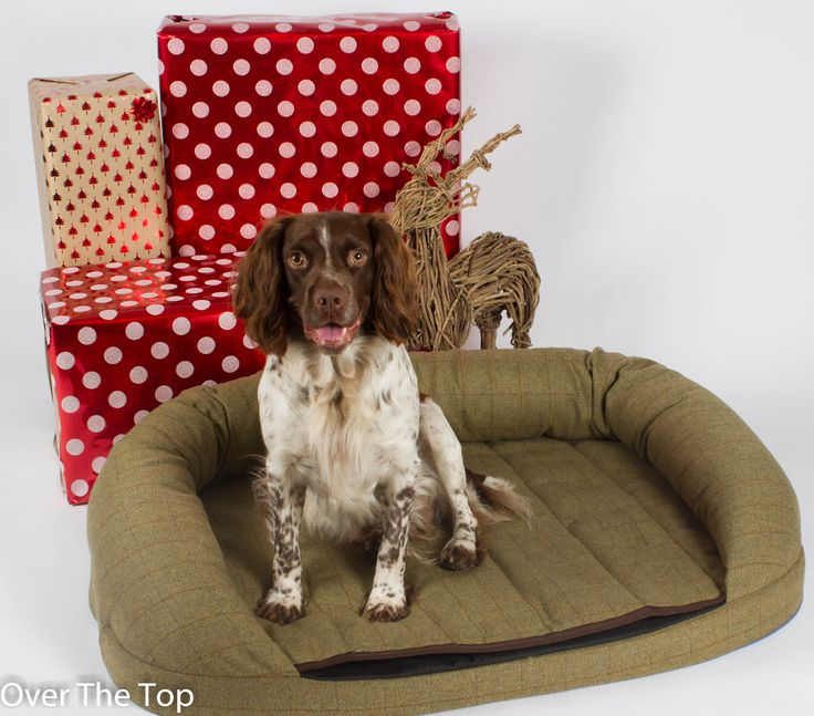 Treat your dog to a Premier Tweed OTT Dog Bed this Christmas! http://www.overthetop.co.uk/premier-collection/