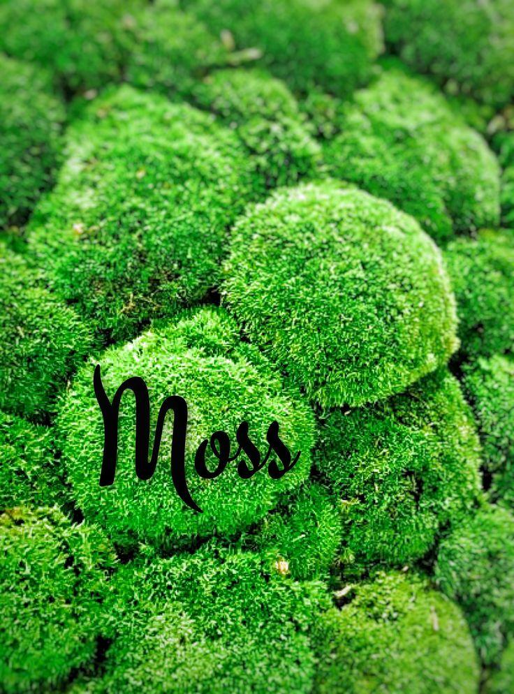 Moss   #nikosuvrohlik
