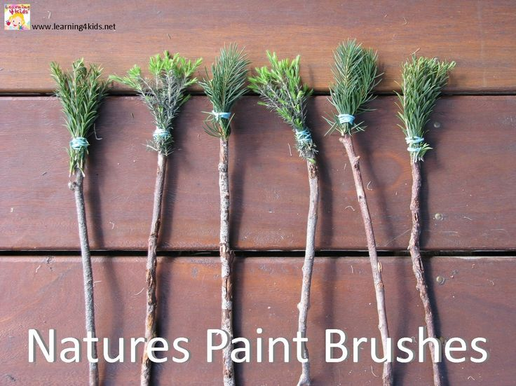 Natures Paint Brushes