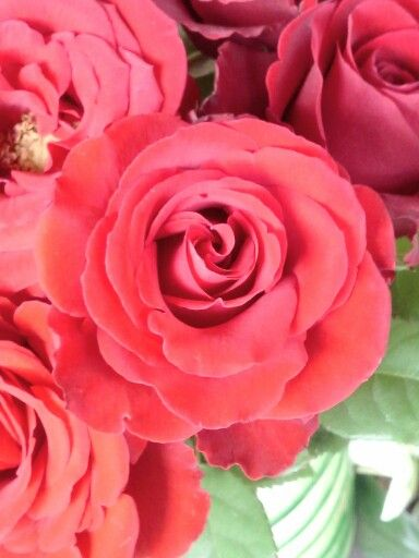Red roses on it's almost full bloom.