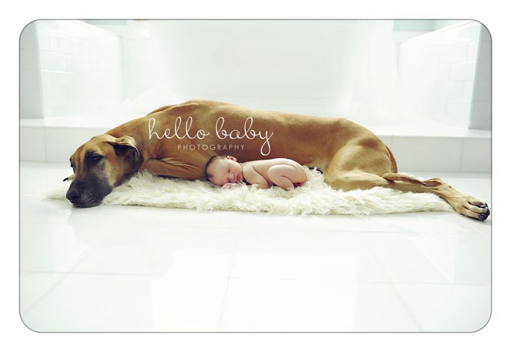 Hello Baby Photography, little baby and giant dog, yes!