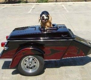 Motorcycle Dog Trailers For Sale