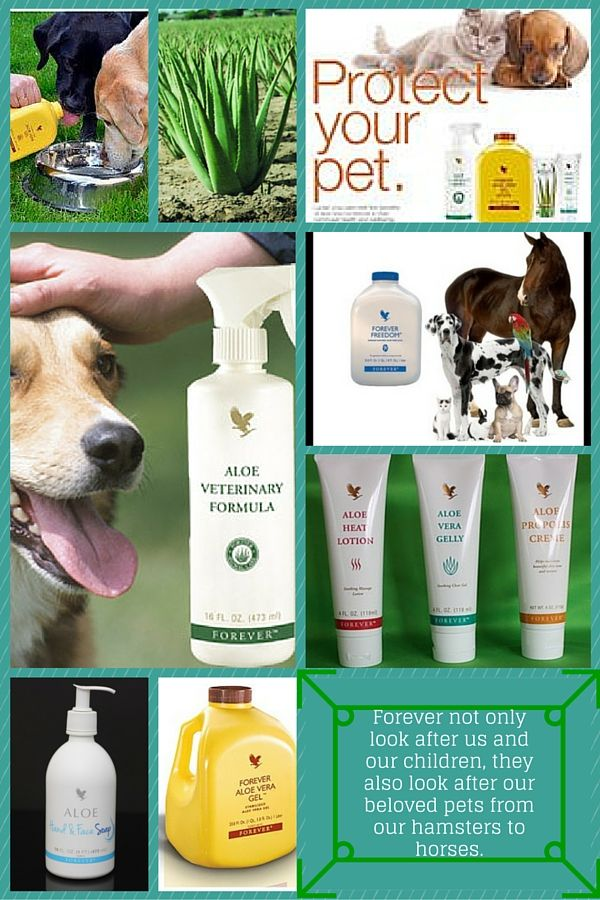 Forever Living sell lots of products which are suitable to use on your animals, all of our products are made from 100% aloe gel, without pesticides or herbicides. ALL of our products are cruelty free. if you want more information get in contact, or visit my website for details of costs