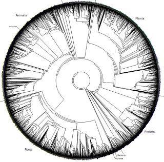 El rasta que especula: El árbol filogenético circular
