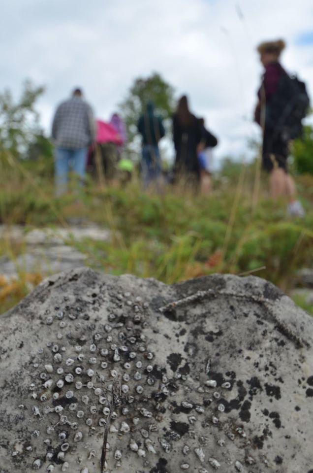 Fossil Hunt- www.gordonspark.com
