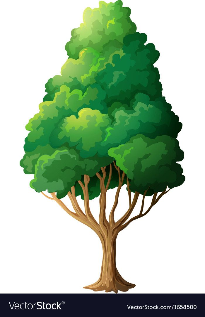 A Tall Old Tree On A White Background Download A Free Preview Or High Quality Adobe Illustrator Ai Eps Pdf And High Resolutio Tree Art Clip Art Tree Clipart