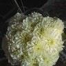 Bouquet da sposa, con dalie