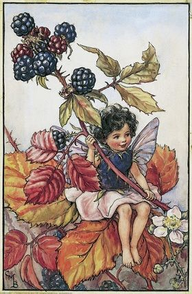 Illustration for the Blackberry Fairy from Flower Fairies of the Autumn. Author / Illustrator Cicely Mary Barker