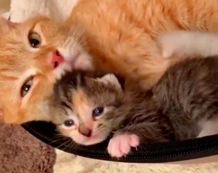 A Stray Cat Was So Happy When Her Kittens Were Saved From An Uncertain Fate Sarah Kelly Kellyfosterkittens A Ginger With Images Kittens Cat Having Kittens Happy Kitten