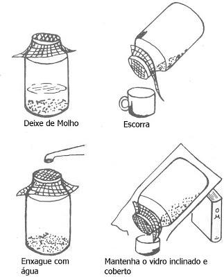 Mungo-Verde: Como fazer em casa seu broto/germinado.