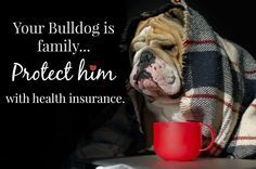 Best Pet Health Insurance Providers For English Bulldogs