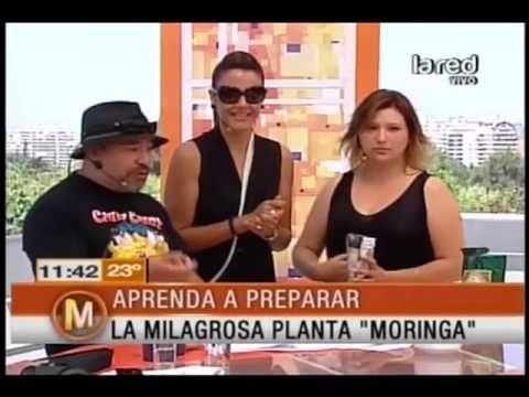 Aprenda a preparar la milagrosa planta Moringa