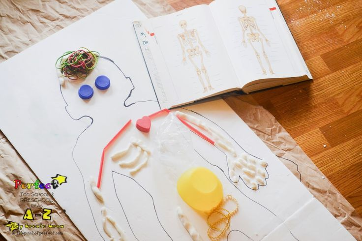 Letter of the Week A-Z Series: B is for Body Preschool Science Activity | A Little Pinch of Perfect