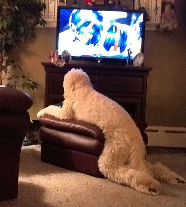 Animals Who Sit Like They Are Humans LOL Animal Pictures - 22 animals acting like humans