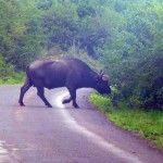 Safari in Kenya - Wildlife Adventures - Kenyan Moments