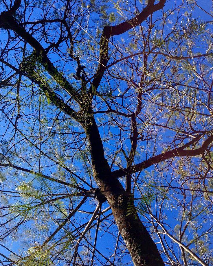 Autumn . . . . . #brasília #autumn #tree #skylovers #saved #nature