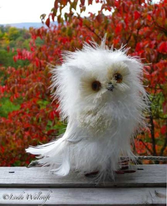 And now you know Disheveled Owls exist and they're awesome