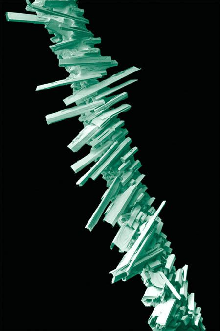 Microscopic frost accumulating on a blade of grass (SEM), image credit: Eric Erbe.