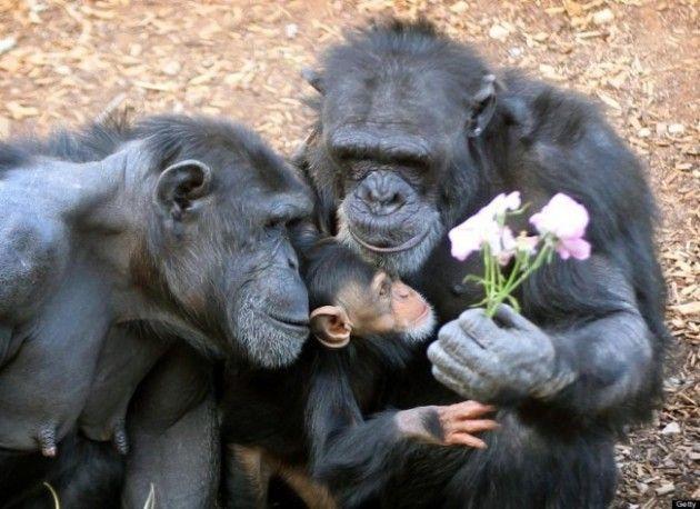 Hayvanlar âleminden 19 Sevimli Aile Fotoğrafı    : NeoTempo
