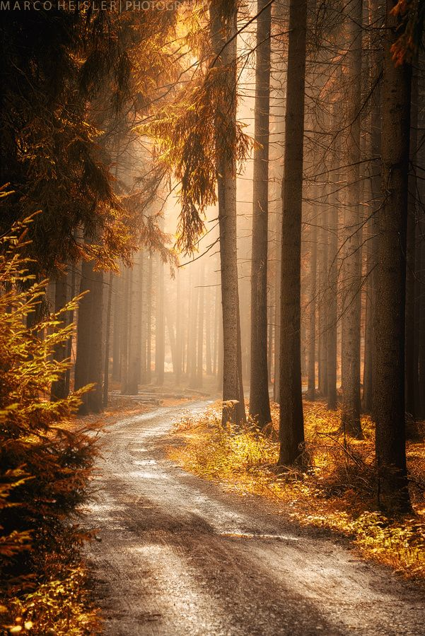 "drxgonfly: "" Golden Hues (by Marco Heisler) FACEBOOK 