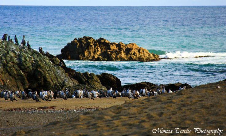 The Shags and sealions use these stunning beaches as well. Riverton in winter.  June 2013.