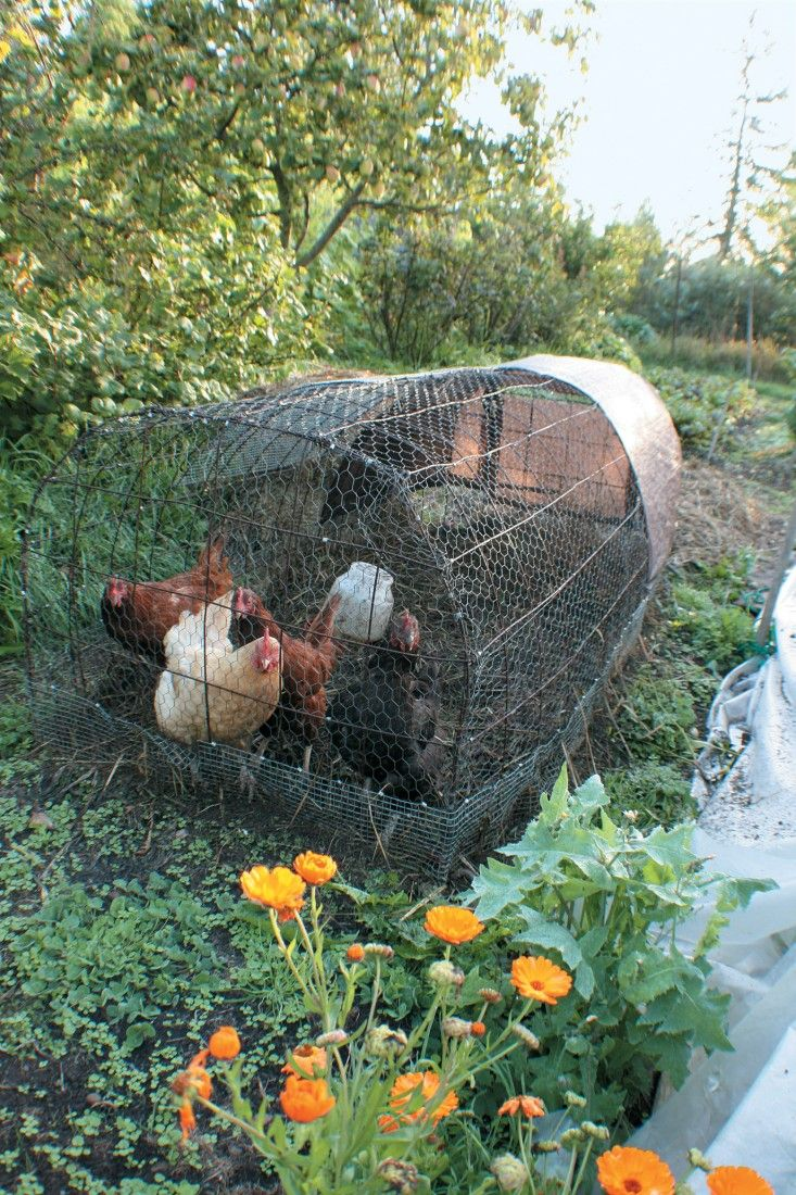 Considerations of time, space, and climate will dictate what kind of coop makes the most sense for your backyard. (From Free-Range Chicken Gardens, by Jessi Bloom)