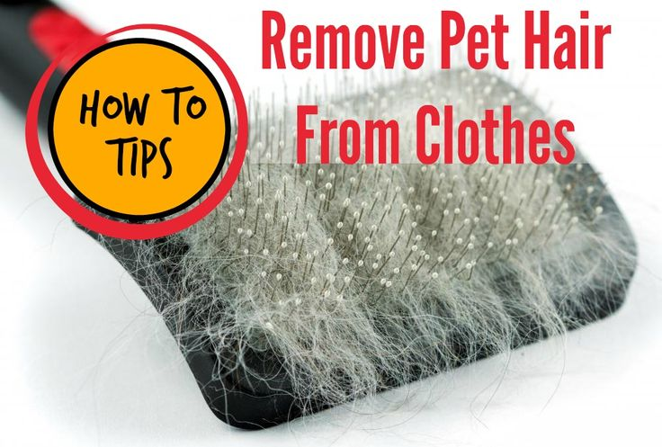 "How to Remove Pet Hair from Clothes - very handy tips. My favorite: Add 1/2 cup white distilled vinegar to the rinse cycle when washing loads with lots of lint or hair. The vinegar will help the fabric fibers relax and ""release"" the hair. http://laundry.about.com/od/petlaundryandstains/a/How-To-Remove-Pet-Hair-From-Clothes.htm"
