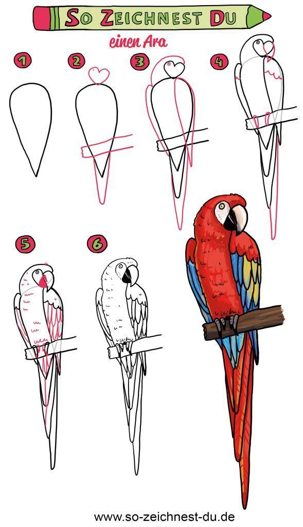 Papagei Zeichnen lernen So zeichnest du   Desenhos de