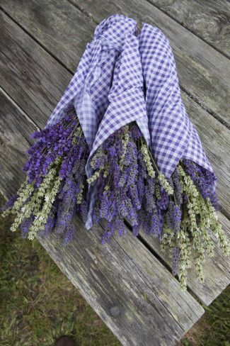Wrapped Bouquets of Dried Lavender at Lavender Festival, Sequim, Washington, USA Photographic Print by John & Lisa Merrill at AllPosters.com