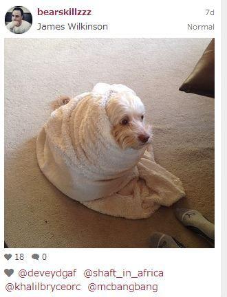 purrito dog burrito .