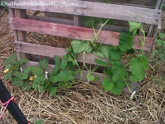 DIY Pallet Garden Pumpkin Trellis and loads of other pallet garden ideas and tips.