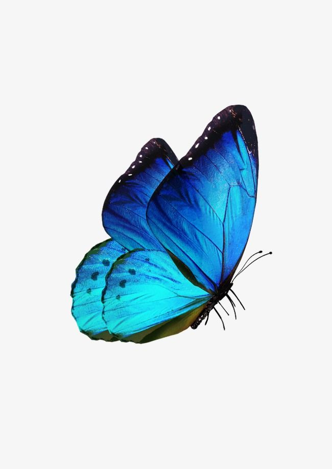 Butterfly Butterfly Clipart Blue Fly Png Transparent Clipart