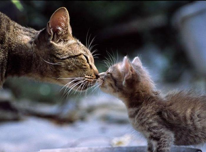 Assez Les 25 meilleures idées de la catégorie Bébé chaton a donner sur  IY84
