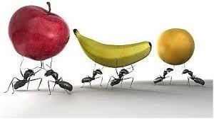 दादी नानी के नुस्खे: 'चींटियों से रोकथाम'