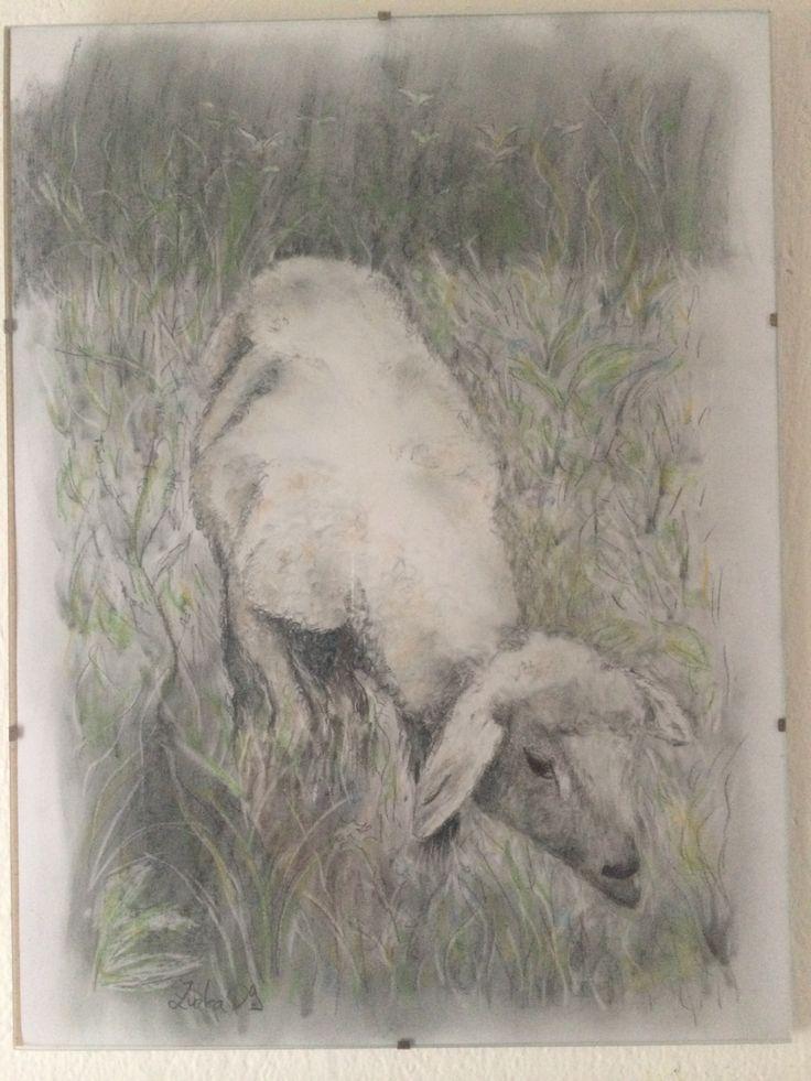 kresba ovečky tužkou a pastelem od Zuzky Dušánkové