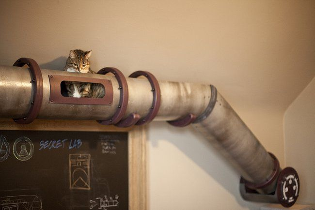 Steampunk Cat Transit System Shuttles Kitties across Mad Scientist's Secret Lab : TreeHugger