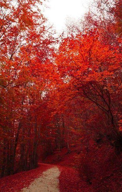 """Color me blood red"" Nymfeo, Greece / by daisukekuroneko"