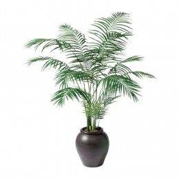The Areca Palm will filter the air you breathe during the day time.