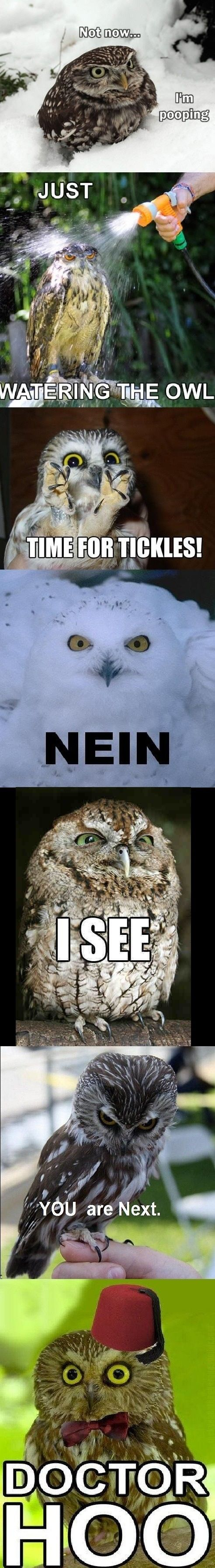 OMG the first one! But all funny. I love that owls are scary-cute!