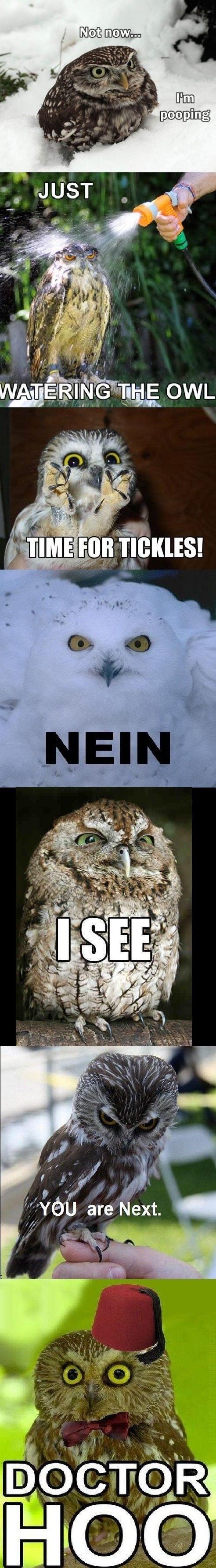 I heard you like owls