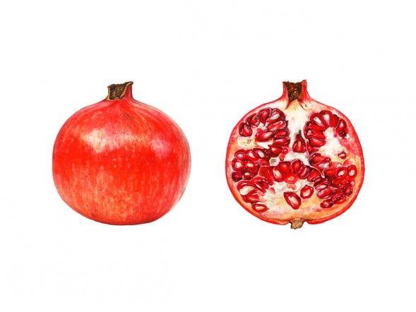 "Anna Mason Art   Dissected Pomegranate Botanical print from an original watercolor £60 9"" x 12"" Shipped worldwide http://annamasonart.com"
