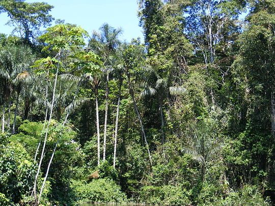 Amazonian rainforest.JPG