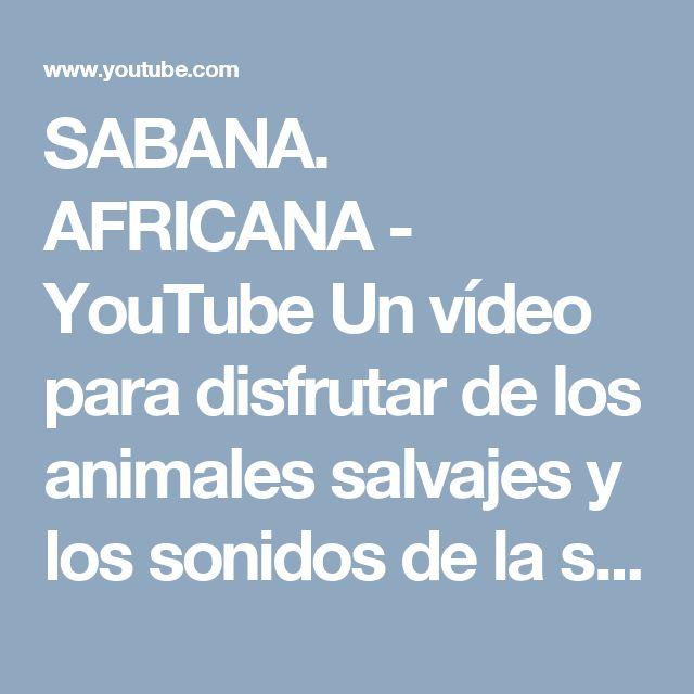 SABANA. AFRICANA - YouTube Un vídeo para disfrutar de los animales salvajes y los sonidos de la sabana.