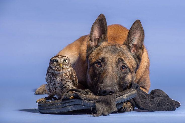 Собака исова, которые немогут жить друг без друга