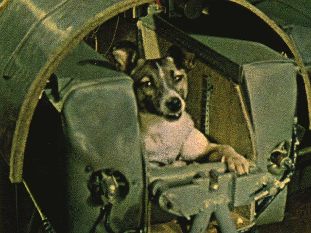 Laika    The first being to travel to outer space was a female part-Samoyed terrier originally named Kudryavka (Little Curly) but later renamed Laika (Barker). She weighed about 6 kg. The pressurized cabin on Sputnik 2 allowed enough room for her to lie down or stand and was padded. An air regeneration system provided oxygen; food and water were dispensed in a gelatinized form. Laika was fitted with a harness, a bag to collect waste, and electrodes to monitor vital signs.